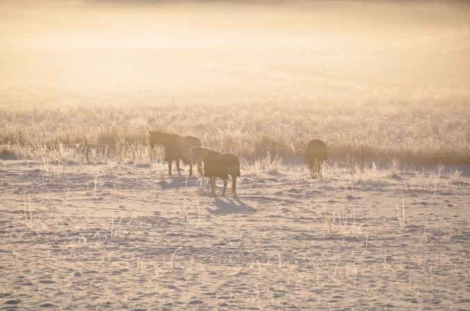 Blogg_hästar (7)